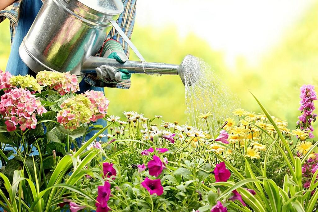 Blumen Im Garten Richtig Gieen So Bleiben Sie Lange Schn with regard to size 1200 X 800