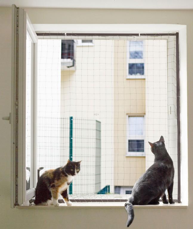 Fenstersicherung Fr Katzen Mit Einem Fenster Netzrahmen for dimensions 1685 X 2000