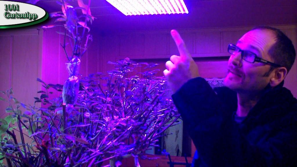 Gartentipp Februar 0212 Led Grow Lampen Fr Jungpflanzen Und with dimensions 1920 X 1080