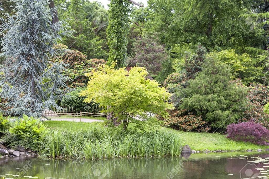 Japanischer Garten Exotische Pflanzen Wroclaw Polen Der within sizing 1300 X 866