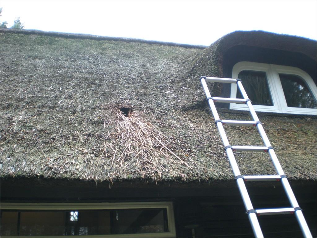 Marderabwehr Dachboden Marderfrei Marderschreck Marderschutz Marder inside sizing 3072 X 2304