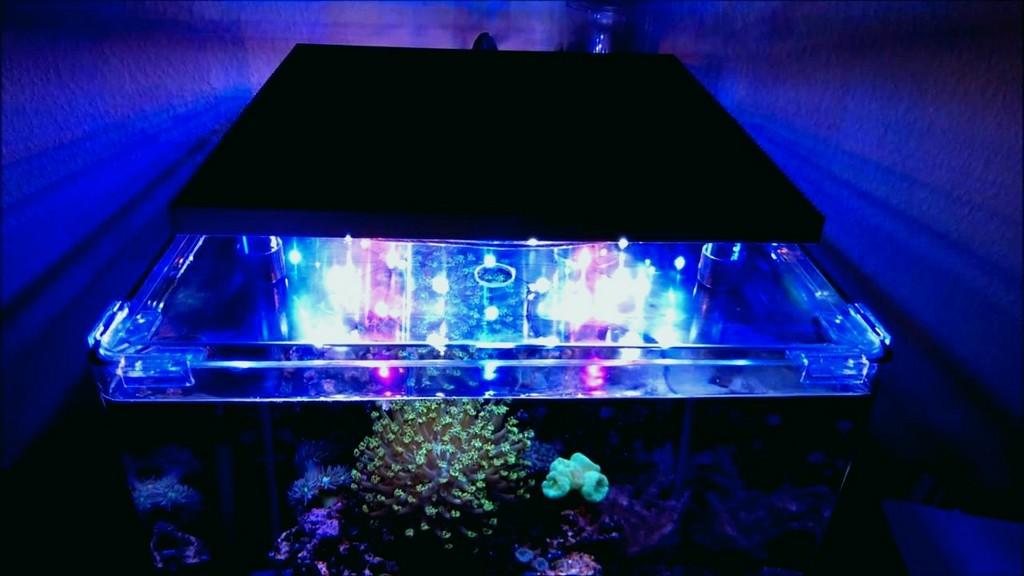 Meerwasseraquarium Led Beleuchtung Selber Bauen Inspirational Led in sizing 1280 X 720