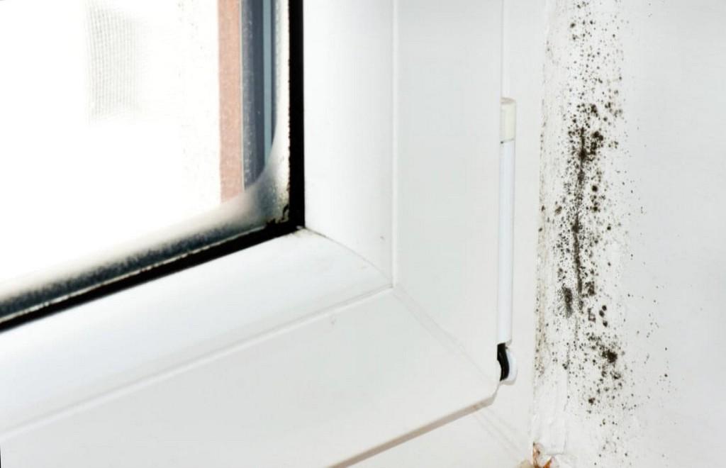 Schimmel Am Fenster Oder Fensterrahmen Einfach Entfernen for size 1108 X 714
