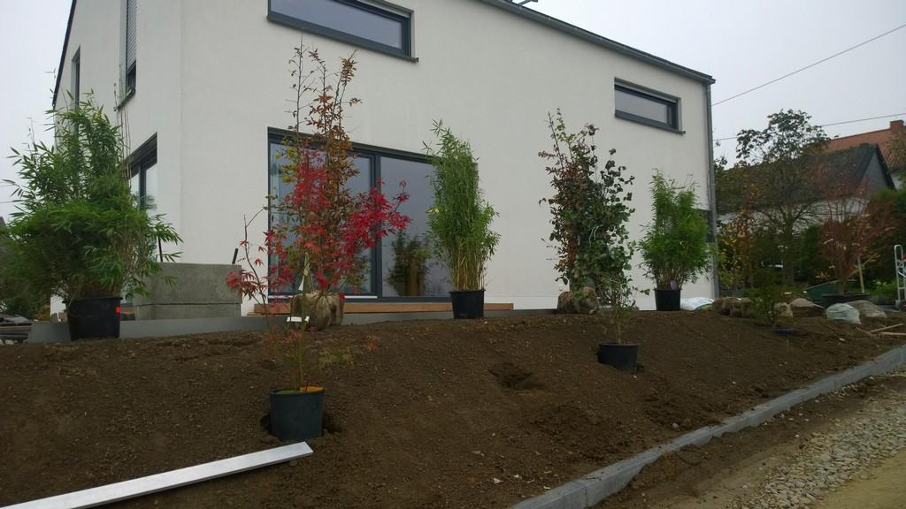 Sichtschutzbepflanzung Moderner Sichtschutz Im Garten within size 3072 X 1728