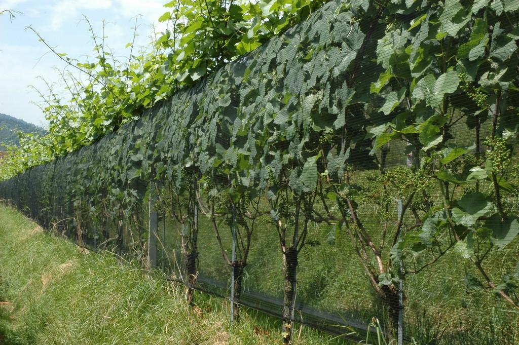 Weinbau inside sizing 3008 X 2000