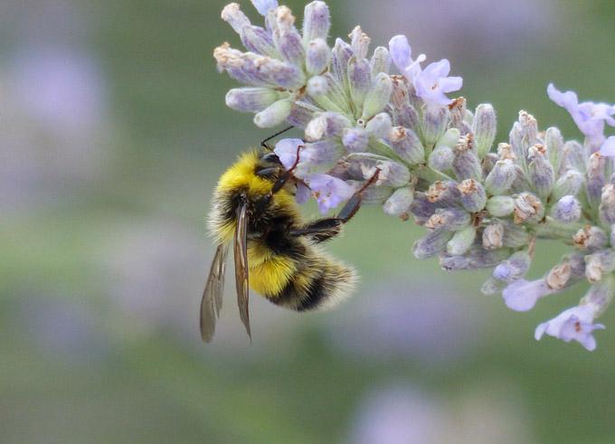Wespen Hornissen Wildbienen Und Hummeln Stadt Kln regarding proportions 4000 X 3000