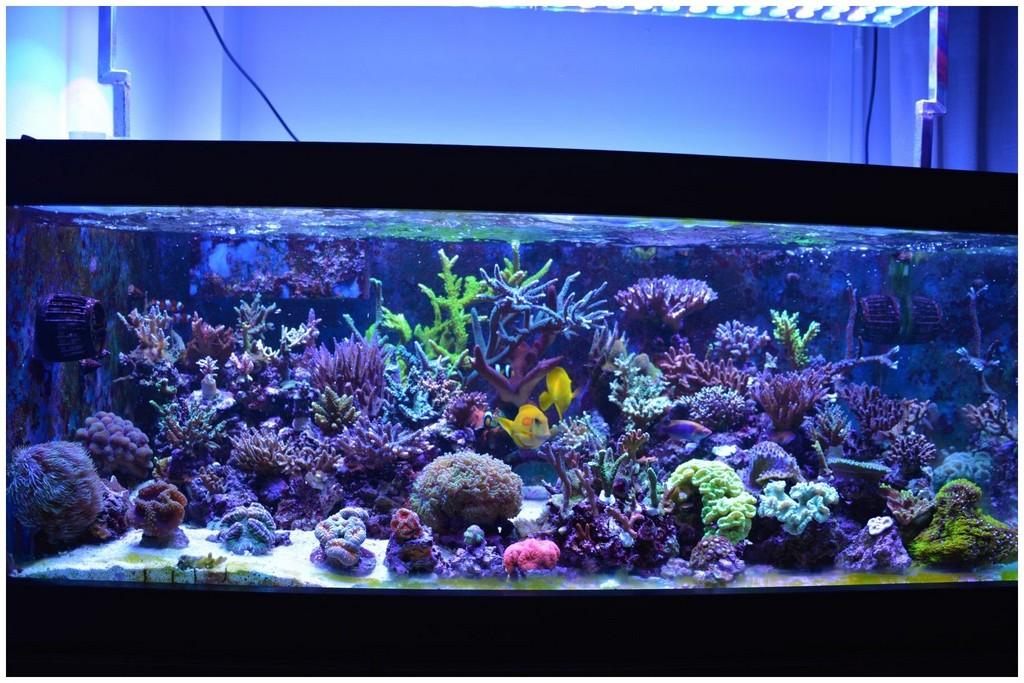 Aquarium Beleuchtung 120905 Aquarium Led Beleuchtung Orphek regarding proportions 1590 X 1060
