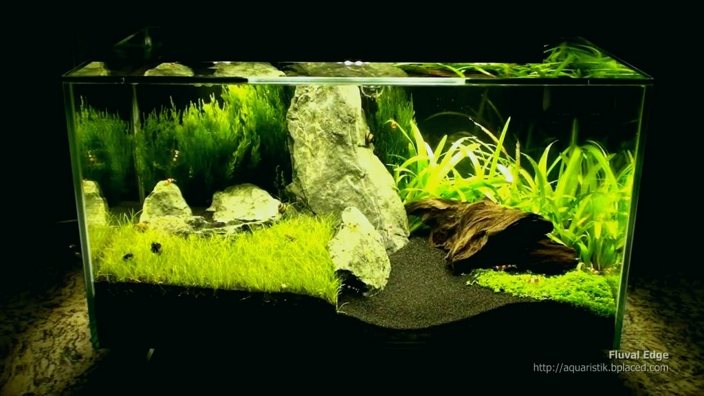 Aquarium Led Beleuchtung Erfahrung Lovely Fluval Edge Mit Extra throughout sizing 1280 X 720