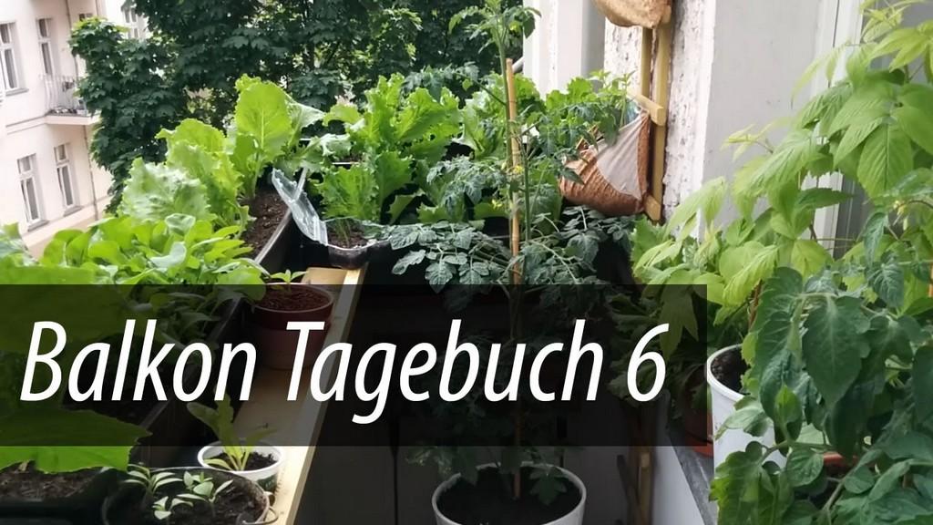 Balkon Tagebuch 6 Gurken Tomaten Und Salat Gehen In Die Hhe inside measurements 1280 X 720