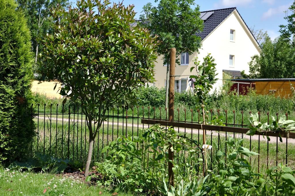 Der Garten Steckzaun Anneau 115 Roh Hat Nach 3 Monaten Schon Eine throughout size 4386 X 2920