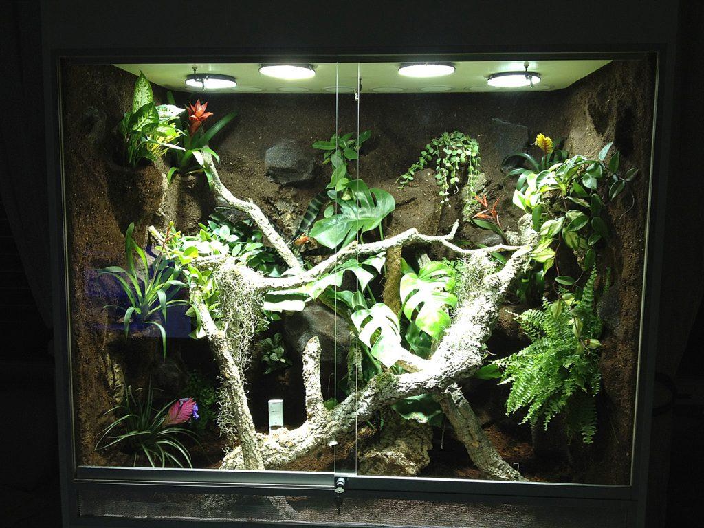 Ein Beispiel Fr Gutes Pflanzenwachstum Bei Idealer Beleuchtung Und for size 1024 X 768