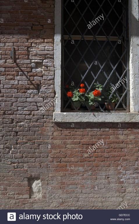 Geranien Stossen Durch Sicherheit Gitter Auf Fensterbrett Zeigt Das intended for dimensions 863 X 1390