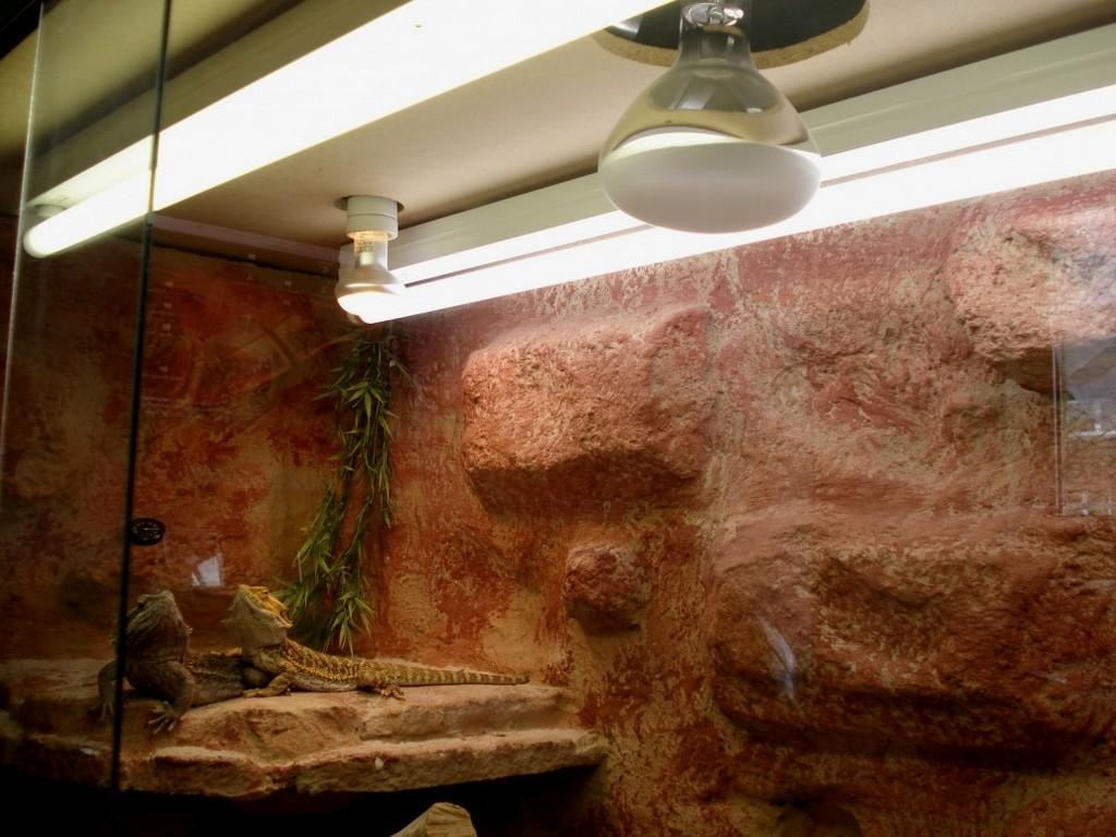 Gro Terrarium Beleuchtung Wunderschone Einbauen Bild Von Lampe In with dimensions 1031 X 773