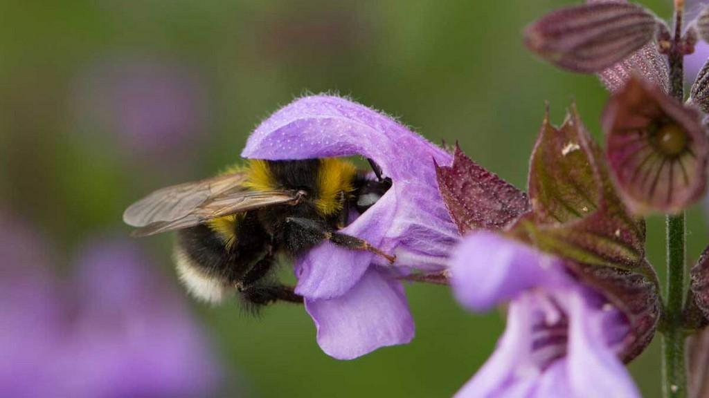 Hilfe Fr Wildbienen Tipps Fr Balkon Terrasse Und Garten Bund Ev in dimensions 1200 X 675