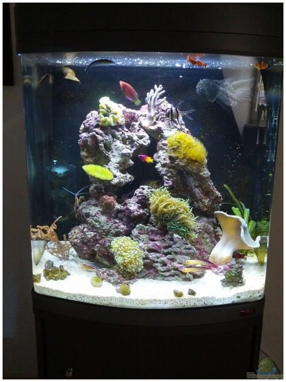 Led Aquarium Beleuchtung Meerwasser 130106 Spannende Led Aquarium throughout sizing 1031 X 1374