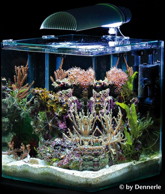 Nano Aquarium Komplettset Unsere Favoriten with regard to sizing 1273 X 1500