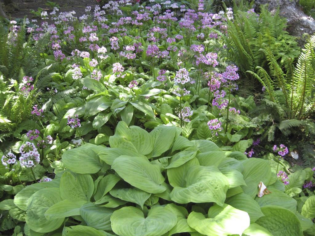Schattengarten Ideen Zur Bepflanzung Gartengestaltung Garten in proportions 3072 X 2304