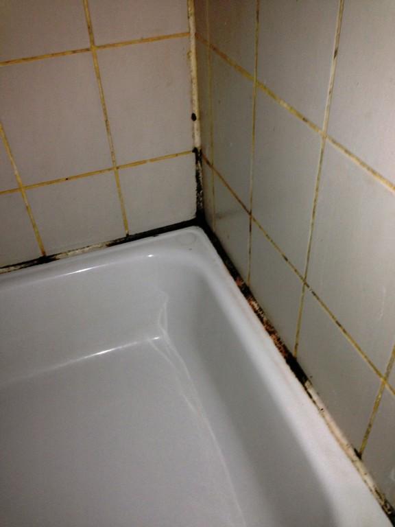 Schimmel Im Bad Die Richtige Schimmelbeseitigung Zum Schimmel in size 808 X 1077