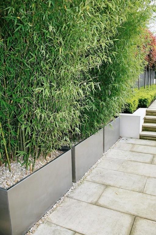 Sichtschutz Fr Den Balkon Mit Bambuspflanzen Und Schilfrohrmatten inside dimensions 750 X 1125