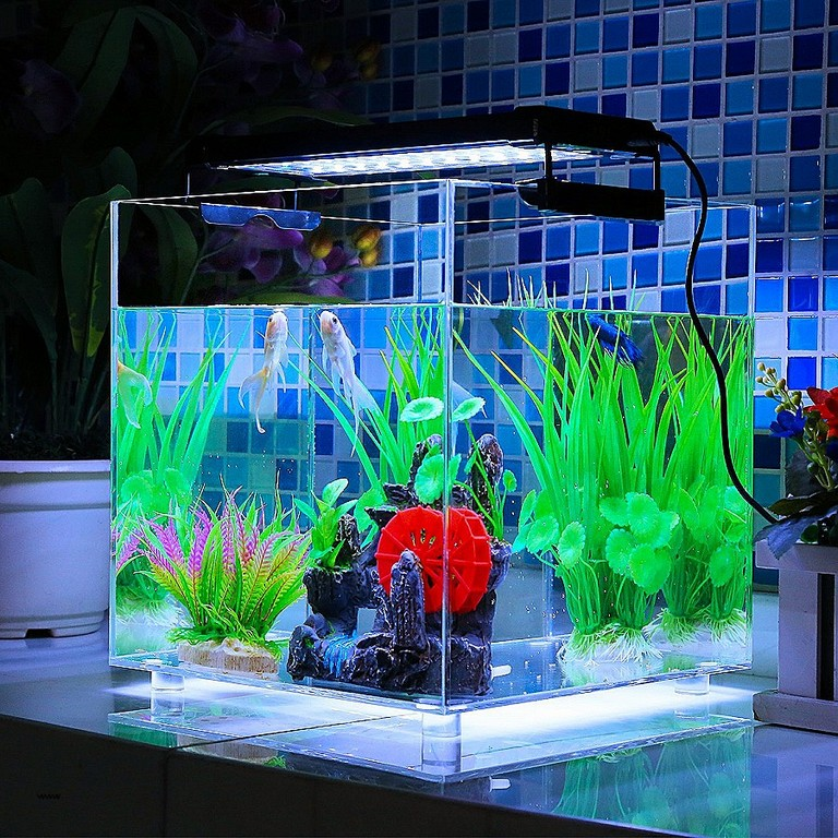 Wie Lange Beleuchtung Im Aquarium Luxury Deckey Aquarium Beleuchtung within size 900 X 900
