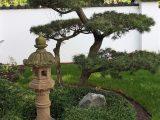 Aisa Und Japan Garten Native Plants with size 1700 X 1133