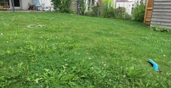 Alten Rasen Abtragen Rollrasen Neu Als Laie Machbar Hausgarten regarding sizing 2095 X 1571
