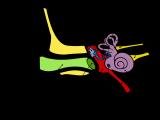 Anatomie Des Menschlichen Ohres regarding dimensions 2000 X 1500