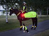 Ausreiten Am Abend Reflektoren Schtzen Pferd Und Reiter Bei within dimensions 2362 X 1575