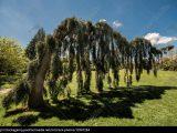 Baum Garten Usa Botanik Exotisch Baden Wrttemberg Stockfoto for measurements 1400 X 984