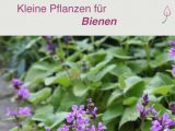 Bienenfreundliche Pflanzen Fr Den Kleinen Garten Oder Den Balkon for dimensions 789 X 1715