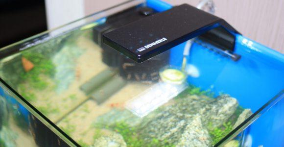 Dennerle Nano Style Led M Ausprobiert Aquarium Welt throughout sizing 1280 X 853