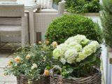 Die Perfekten Pflanzen Fr Einen Garten Im Romantischen Shab Chic in proportions 750 X 1137