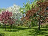 Die Schnsten Bume Fr Den Eigenen Garten within size 1500 X 1068