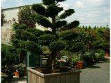 Garten Bonsai Kaufen 286840 Erstaunlich Bonsai Baum Garten Bonsai inside measurements 1029 X 1372