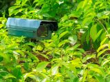 Grn Berwachungskamera Im Garten Lizenzfreie Fotos Bilder Und intended for dimensions 1300 X 866