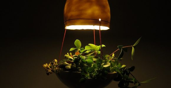 Hanglamp Plant En Lamp Nr3 Van Mote Gratis Verzending Markitanl intended for sizing 1000 X 1000