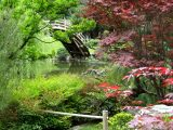 Japanischer Garten Einen Japanischen Garten Anlegen with measurements 1000 X 1001