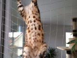 Katzentrsicherung Katzensicherung Fr Balkontren Katzen inside dimensions 2988 X 5312
