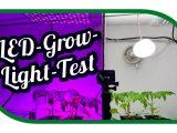 Led Grow Light Test Aussaat Jungpflanzenanzucht Zeitraffer with regard to proportions 1575 X 890