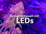Leds Beim Grow Viel Licht Wenig Kosten Und Was Es An Neuerungen with size 922 X 900