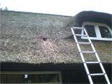 Marderabwehr Dachboden Beech Marten Stone Pup Steinmarder Stein in proportions 3072 X 2304