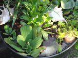 Mini Teich Bepflanzen Attraktiv Fr Balkon Terrasse Kleine Grten with sizing 1200 X 799