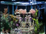 Nano Aquarium Komplettset Unsere Favoriten with regard to sizing 1273 X 1500
