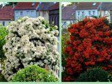Pflegeleichte Bsche Garten Luxus Blten Bsche Garten Beeren Natur within proportions 1500 X 900