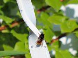 Stadtlandlebenslust Wir Sind Bienen Onkel inside size 1002 X 817