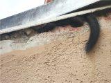 Stilvolle Marder Im Dachboden Postcategory Marderschreck with sizing 1034 X 775