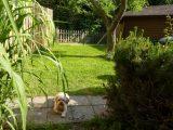 Urlaub Mit Hund Ostsee Eingezunter Garten Tolle Abbild Und Jpg Am inside dimensions 1024 X 768