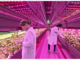 Wachstumsfrdernde Led Beleuchtung Von Pflanzen in dimensions 1024 X 768