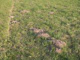 Whlmaus Erfolgreich Bekmpfen Und Vertreiben Plantura regarding size 1600 X 1200