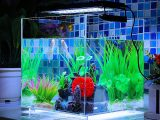 Wie Lange Beleuchtung Im Aquarium Luxury Deckey Aquarium Beleuchtung in proportions 900 X 900